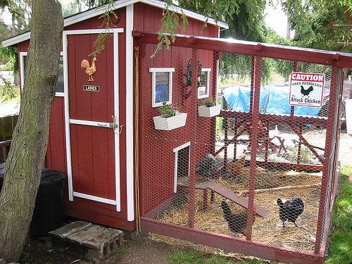 Chicken coop 6