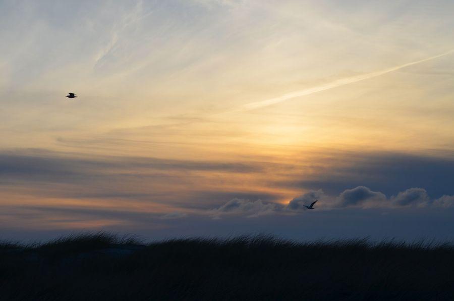 Cannon-Beach-Birds-Run-Lori-Run