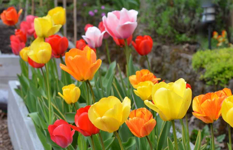 Do perennial flowers come back every year images flower decoration do perennial flowers come back every year choice image flower do perennial flowers come back every mightylinksfo